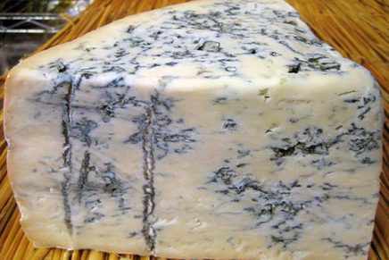 Gorgonzola, the cheese that lives
