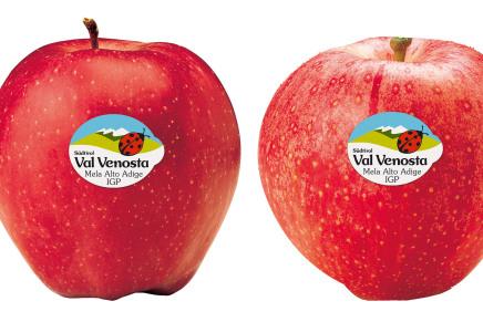 Val Venosta apple, all over the world