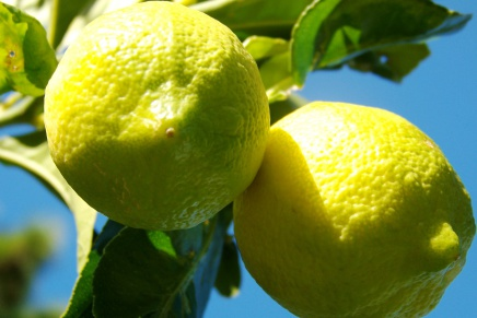 A very sweet and juicy yellow
