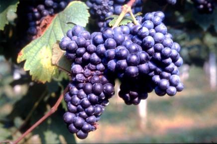 """Lambrusco, """"the humble Champagne of Emilia Romagna"""""""