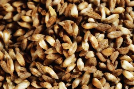 Revival of an ancient cereal: the spelt