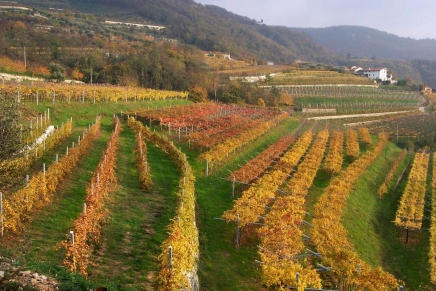 Valpolicella, the valleys with many cellars