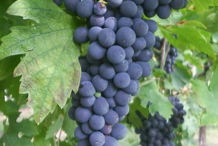 A DOC App for Valpolicella wines