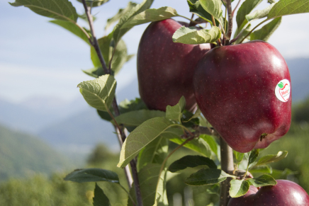 Valtellina Apples