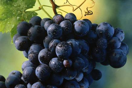2015 Simply Great Italian Wines Tours end in Asia