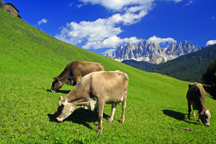 The South Tyrolean dairy sector faces the demand crisis