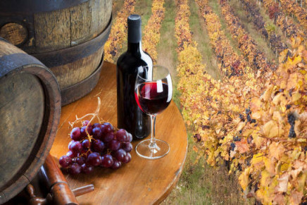 Promotion increases Marche wine export