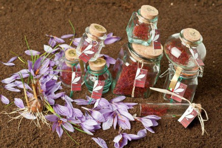 Saffron, the new red gold from the north