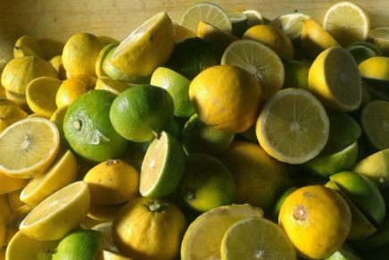 Bergamot, a new proposal by Citrus