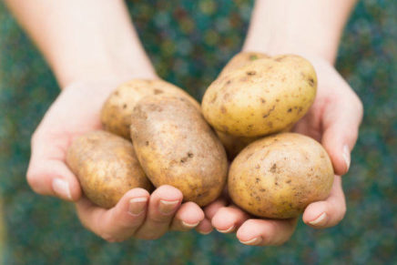 The Consortium for the protection of the Bologna Potato Pdo is born