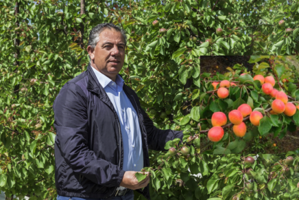 Gallo launches the red apricot