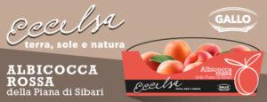 Eccelsa Apricot