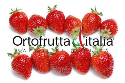 Ortofrutta d'Italia started with strawberries to promote Italian excellence