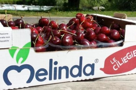 Melinda signs a deal to sell cherries