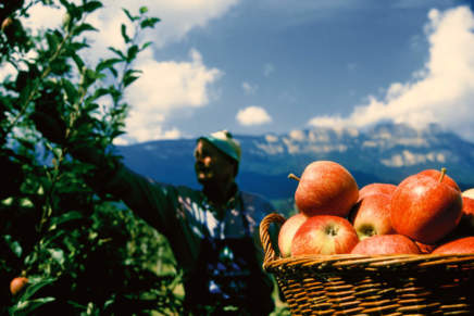 I am Marlene, a new look for the apple of South Tyrol
