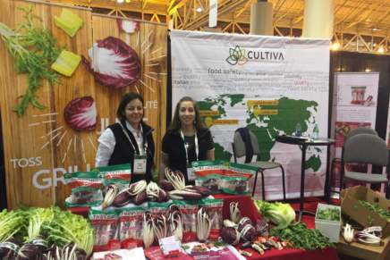Cultiva brings radicchio to the USA