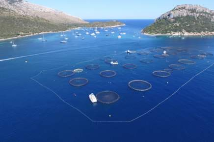 Farmed Seabass and seabream from Italian Compagnie Ittiche Riunite awarded Friend of the Sea