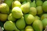Dolci Pensieri di Calabria: figs' delicacies
